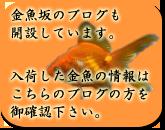 金魚坂ブログを開設致しました。入荷した金魚の情報はこちらのブログの方を御確認下さい。